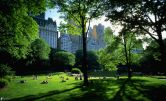 central-park-151273